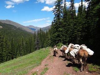 mule pack-in